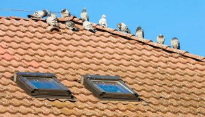 How To Keep Birds Off Roof